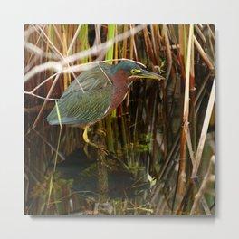 Beautiful Green Heron Metal Print