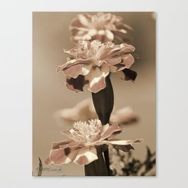 French Marigold named Durango Bolero Canvas Print