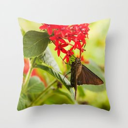 Blue Butterfly Photography Print Throw Pillow