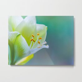 White Flower Against Teal Turquoise Background Metal Print