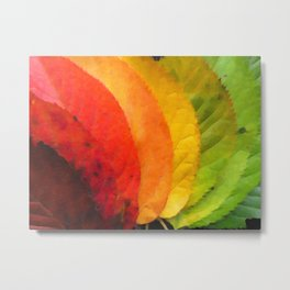 Collection beautiful colorful autumn leaves Metal Print