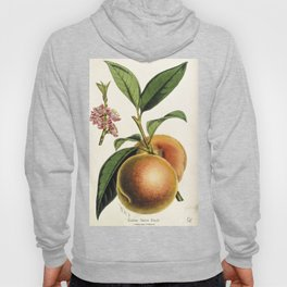 A peach plant - vintage illustration Hoody