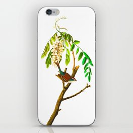 Chipping Sparrow Bird iPhone Skin