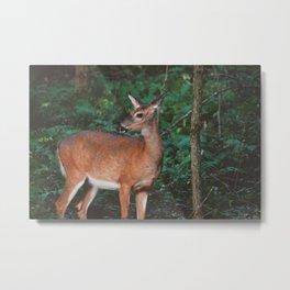 Forest Deer XVI Metal Print