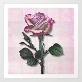 Pink Shimmering Rose Art Print