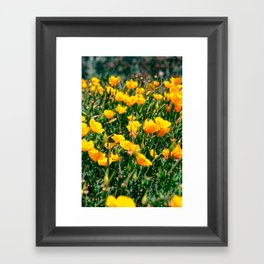 Golden State Framed Art Print