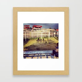 Alberta Rodeo  Framed Art Print