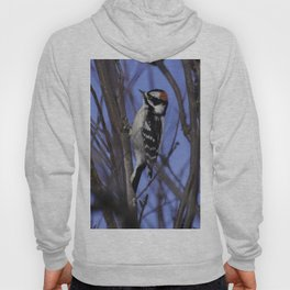 Downy Woodpecker Hoody