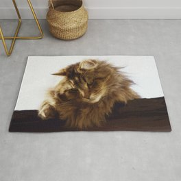 Curious Maine Coon Cat Rug
