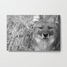 Wilddog Metal Print