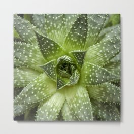 Hawortia Succulente Agave Metal Print