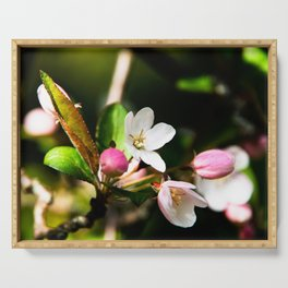 Crab apple flowers Serving Tray
