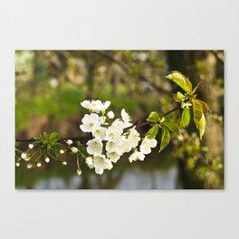 Spring - Cherry Blossom No. 2 Canvas Print