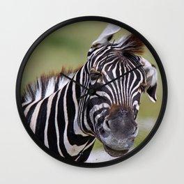 Shaking Zebra, Africa wildlife Wall Clock
