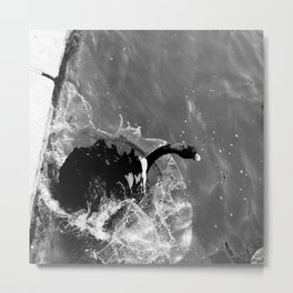 Taking a Dive Metal Print