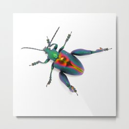 Frog-legged Beetle... Oh-so-shiny! Metal Print