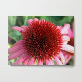 petal pincushion Metal Print