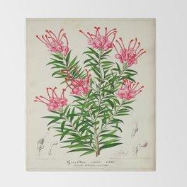 Grevillea Rosea Vintage Botanical Floral Flower Plant Scientific Illustration Throw Blanket
