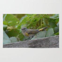 A Female American Redstart Rug