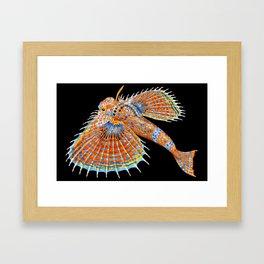 Flying Gurnard Framed Art Print