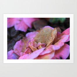 Details of a pink camelia Art Print