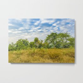 Meadow Tropical Landscape Scene, Guayaquil, Ecuador Metal Print