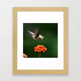 Hummingbird Bullseye Framed Art Print