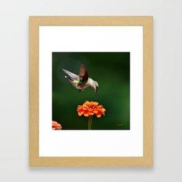 Hummingbird Bullseye Framed Art Print