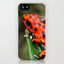 Red Frog iPhone Case