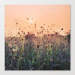 Sunset Floral Background Canvas Print