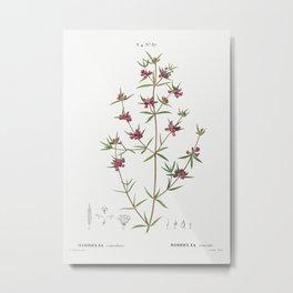 Heath mirbelia, Mirbelia reticulata from Traité des Arbres et Arbustes que l'on cultive en France en Metal Print