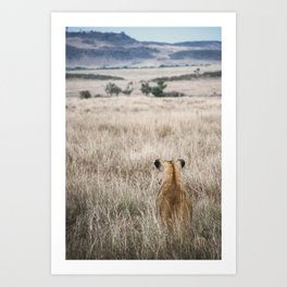 Lioness sits and waits for prey Art Print