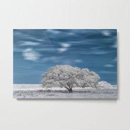 lonely tree in winter Metal Print