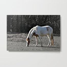 Horse Plains Metal Print