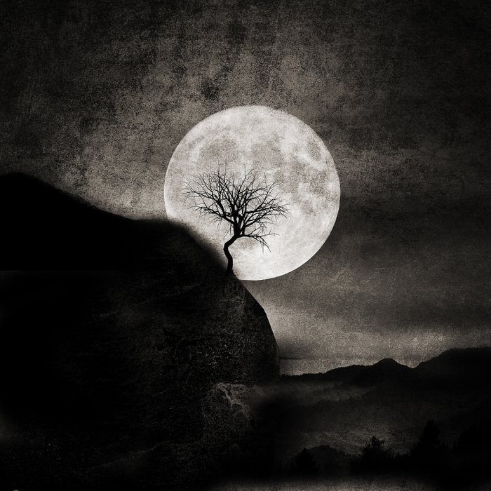 The Moon and the Tree.. Comforters