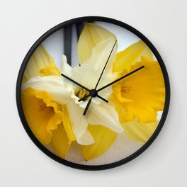 Daffodils resting in the snow after a late London snowstorm in March Wall Clock