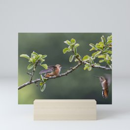 Rufous Hummingbird at Large, No. 2 Mini Art Print