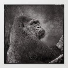 Gorilla. Silverback. BN Canvas Print