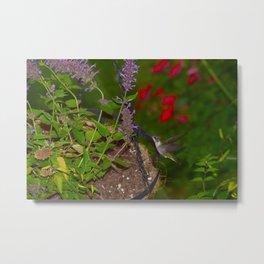 Hanging basket hummingbird with bee balm 52 Metal Print