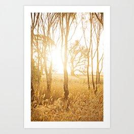 A Bush Sunset Art Print