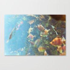 barracuda Canvas Print