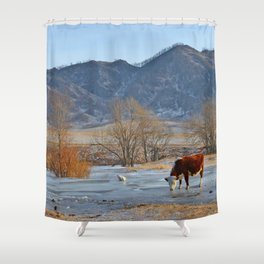 Cow drinking from a mountain stream from under ice in winter Shower Curtain