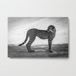B&W Leopard Cub 5 Metal Print
