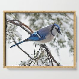 Beautiful Blue Jay Serving Tray