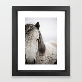 Icelandic White Framed Art Print