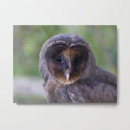 Black barn owl Metal Print