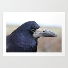 Curious Raven  Art Print