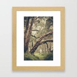 Lakeside Path Framed Art Print