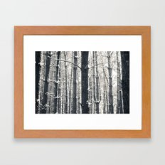 Snowy Pine Grove Framed Art Print