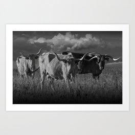 Texas Longhorn Steers under a Cloudy Sky in Black & White Art Print